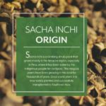 Origin of Sacha Inchi Amazon Rainforest