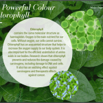 35 Chlorophyll in Cellpro
